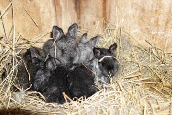 На кроличьей ферме в Воронеже трупы скармливали собакам