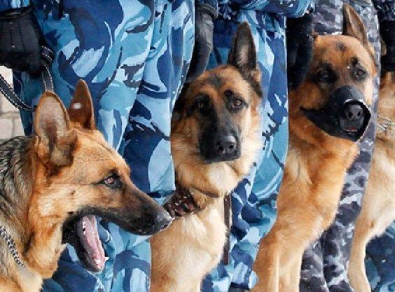 Две грустные собаки: Во Владивостоке семинар о фейк ньюс чуть не сорвался из-за ложного сообщения о минировании