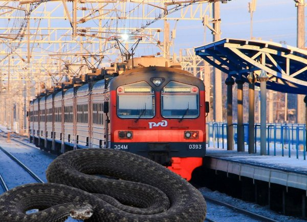 Ядовитое соседство: Под Ростовом станцию РЖД оккупировали гадюки