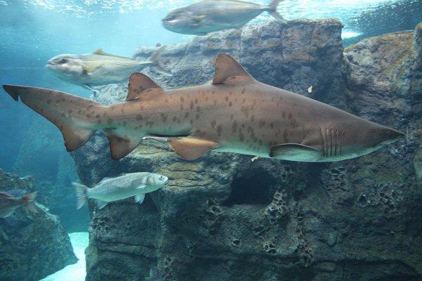 В США в результате нападения акулы скончался мужчина
