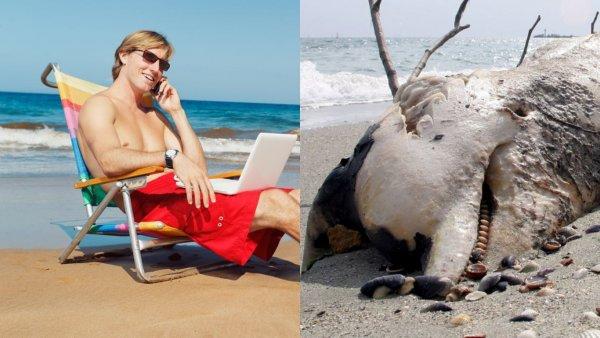 На пляже в Санкт-Петербурге обнаружили мертвого тюленя